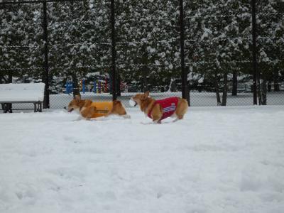 雪遊び12