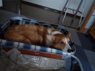 スーツケース犬