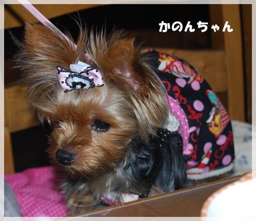 DSC_1249_20110427090647.jpg