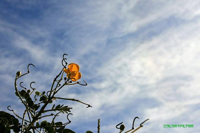 高い空と黄色い花