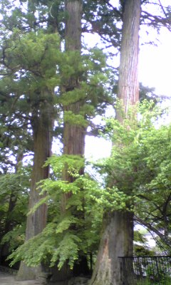 すべてが巨木