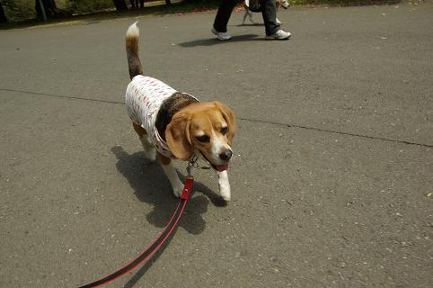 110416B23chara walk on park