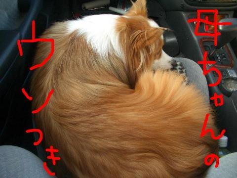 川下公園 ララモカアン  ☆ 006   ★