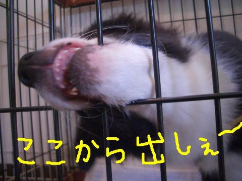 ★シュリお迎え9・8★ 028   ☆