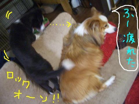 2008・9・9ラムさんシュリさん♪ ♪ 021     ☆
