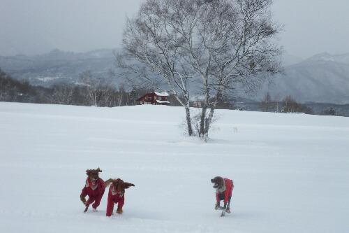 2011.01.15 第1回スノーシューたかつえ 27