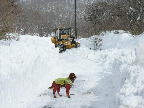 2010.03.10 除雪とスライゴ
