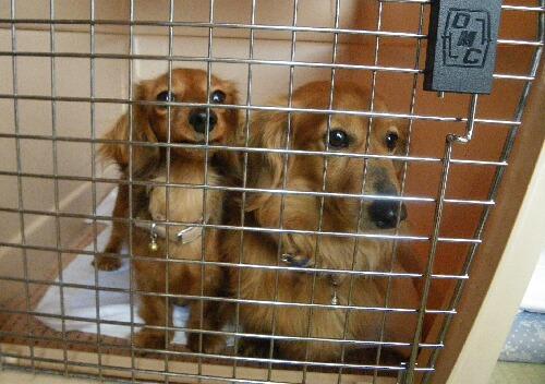 避難犬 ロビンとアミン