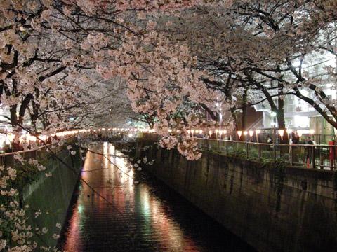 目黒川のお花見[1]