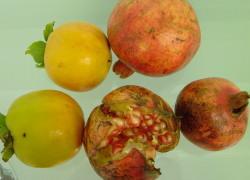柿とザクロ