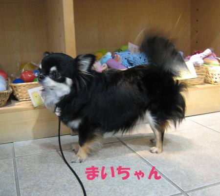 kaorumiuchi2.jpg