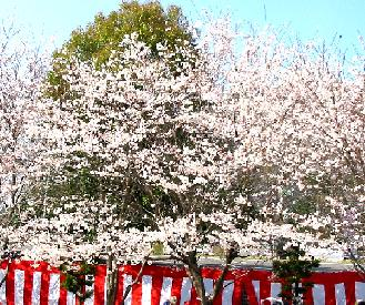 カバヤさくら祭り 2