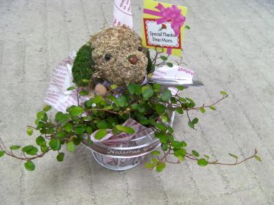 くま鉢植え