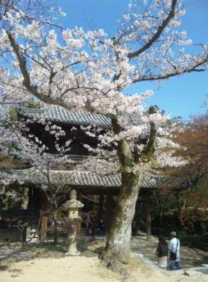 2011 功山寺の桜