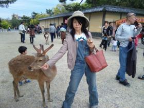 2011旅行 奈良 鹿①