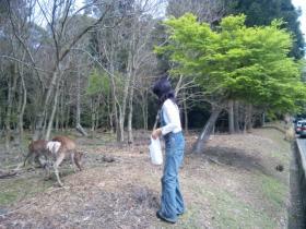 2011旅行 奈良 鹿④
