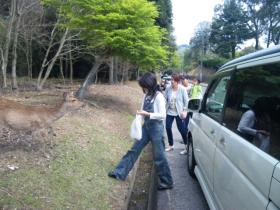 2011旅行 奈良 鹿③