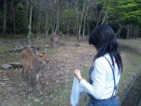 2011旅行 奈良 鹿⑤