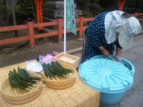 京都 きゅうり