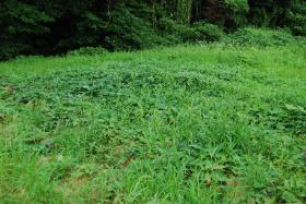 草いっぱい