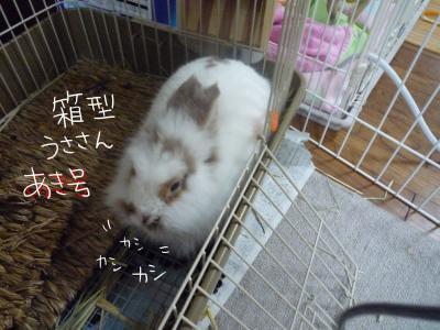 aki1_c.jpg