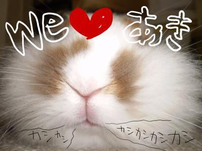 aki3_c.jpg