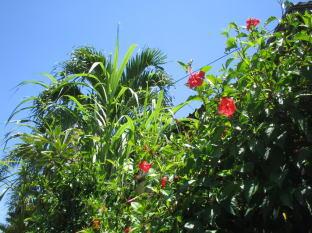 バリ島 今日の空