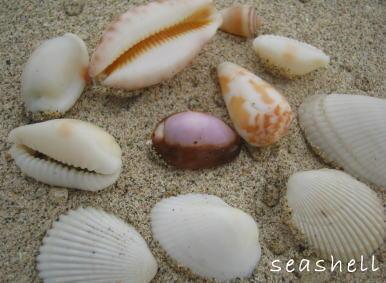 癒しの風景 Seashell