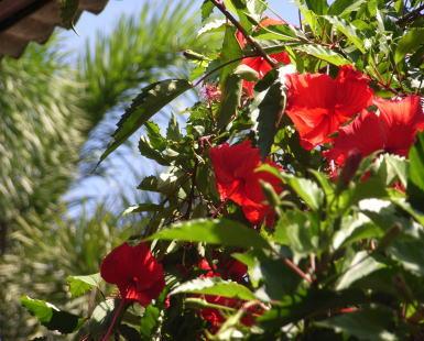 今日のバリ島はとってもよいお天気です!