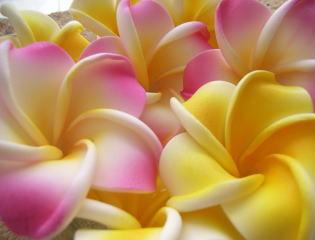 プルメリア(フランジパニ)の造花