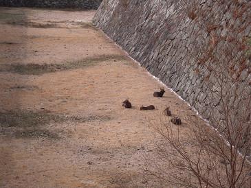 名古屋城 お堀