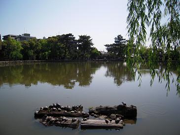 奈良 猿沢池①