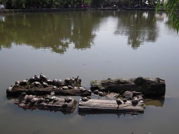 奈良 猿沢池②