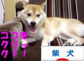 柴犬ズンバナー1011