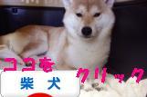 柴犬ズン画像バナー 1016