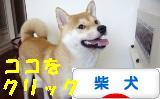 柴犬 ブログ ズンバナ~ 1018