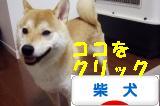 柴犬ズンバナー 101801