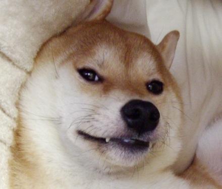 柴犬ブログランキング参戦中 1020のズンは何位かな?