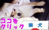 柴犬ブログバナー1020