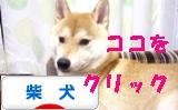 柴犬ブログバナー1021