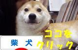 柴犬ブログ バナー1023