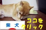 柴犬ブログバナー1024