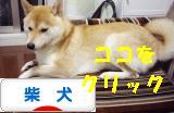 柴犬ブログバナー 1026