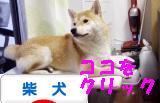柴犬ズンバナー 1028