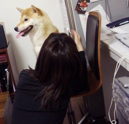 柴犬ブログ ズン画像 ちょっと恐い?