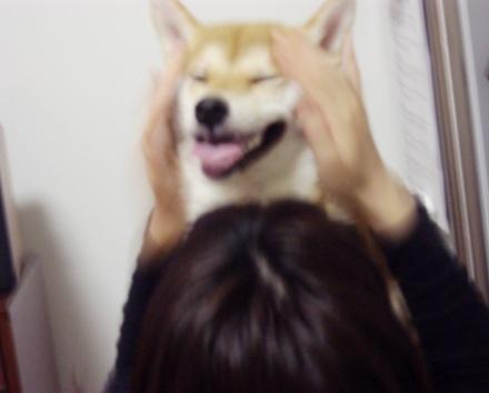 柴犬ブログ ズン画像 かわいいなー