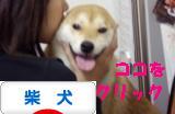 柴犬ブログバナー 1030