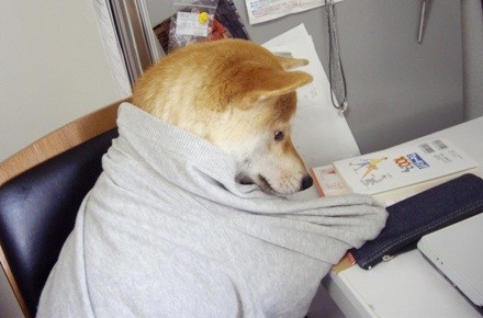 柴犬ブログ ズン画像 ふむふむ