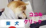 柴犬ブログバナー 1101