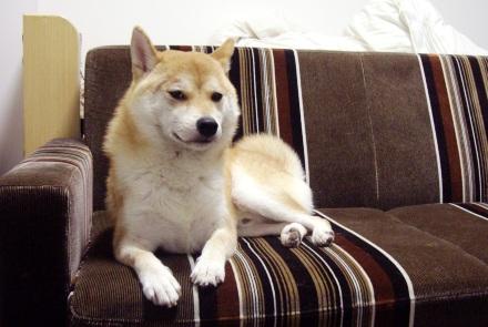 柴犬ブログ ズン画像 きゃわいいな~